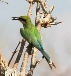 botswana-chobe-safari-15