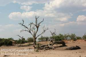 botswana-chobe-safari-landscape-15