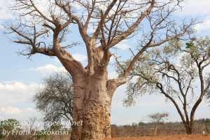botswana-chobe-safari-landscape-32