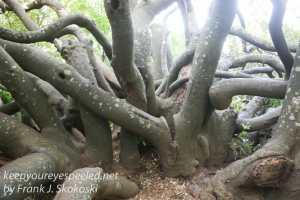 capetown-botanical-gardens-27