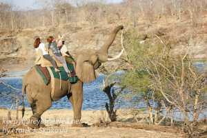 zimbabwe-elephant-ride-24