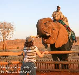 zimbabwe-elephant-ride-31
