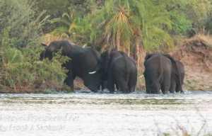 zimbabwe-victoria-falls-zambezi-river-38