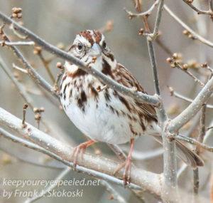 PPL Wetlands birds -16