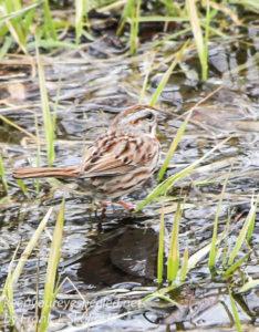 PPL Wetlands birds -7