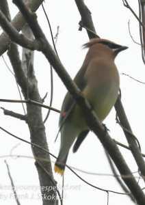 wetlands birds-26