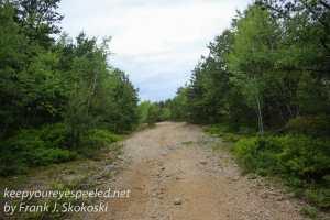 pitch pine barrens -20