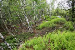 pitch pine barrens -21