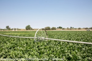 crops being irrigated in Idaho