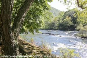 trees along lehigh river