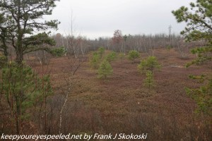 heath barrens on trail