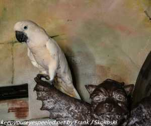 campeche the white parrot at the Gallery Inn