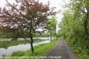trees along Lake Took-A -While