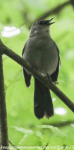 catbird on branch