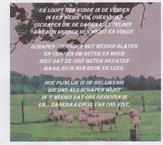 Als schapen
