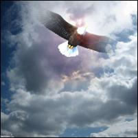Gelijk een adelaar