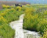 Voorjaarsgroen; foto, groene wereld - kopie