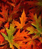 blad in herfststemming