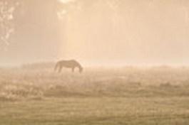 depositphotos_67532073-horse-silhuette-in-sunrise-fog