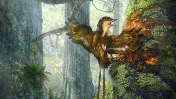 An illustration of a Enantiornithine partially ensnared by tree resin, based on one of the specimens discovered.