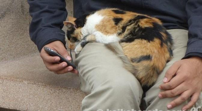 ミラフローレス、ケネディ公園で無料wi-fiを楽しむお兄さんとネコ