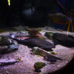 Sealife Blankenberge