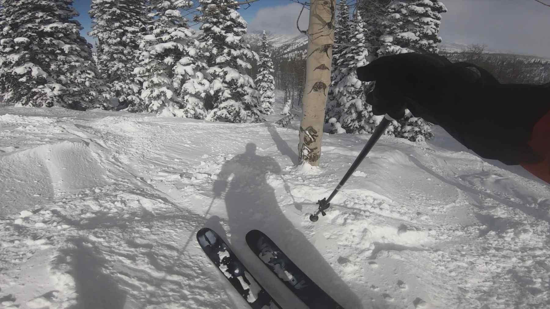 Low angle tree skiing