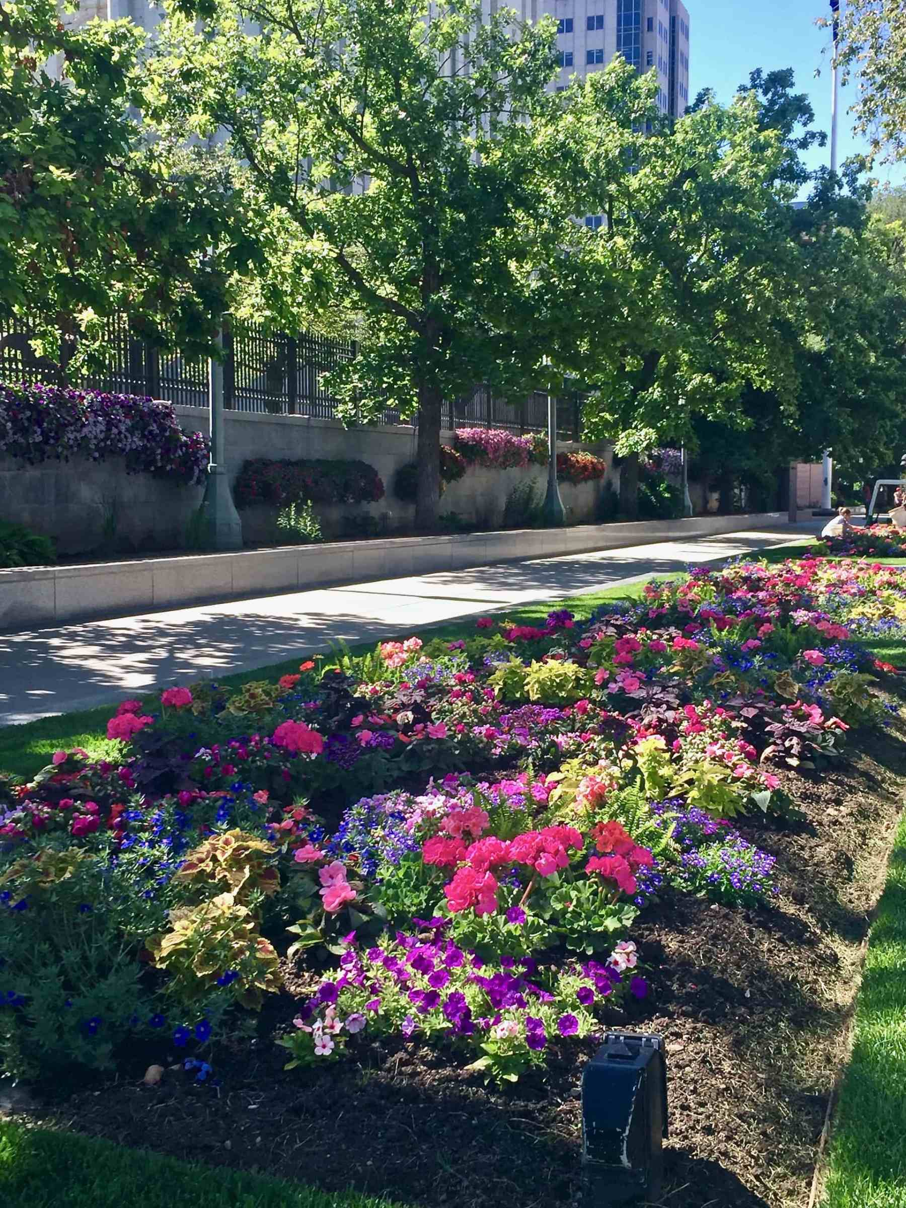 beautiful flowers at Temple Square