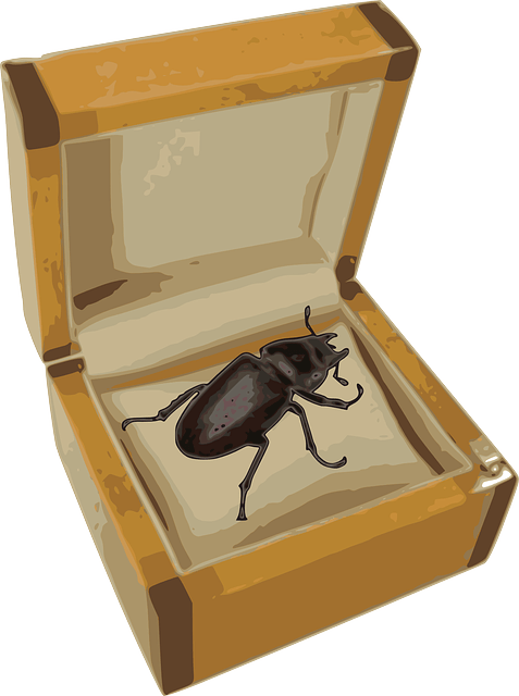 A beetle in a box