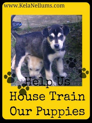 Help Us House Train Our Puppies