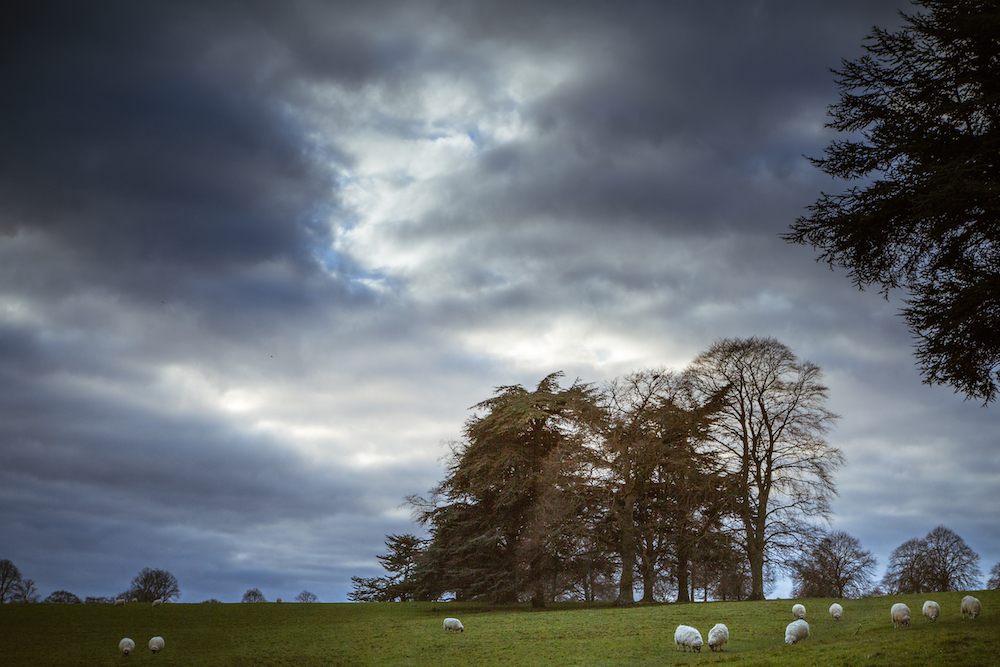"<alt img=""Stormy Day at Blenheim"" data-recalc-dims="