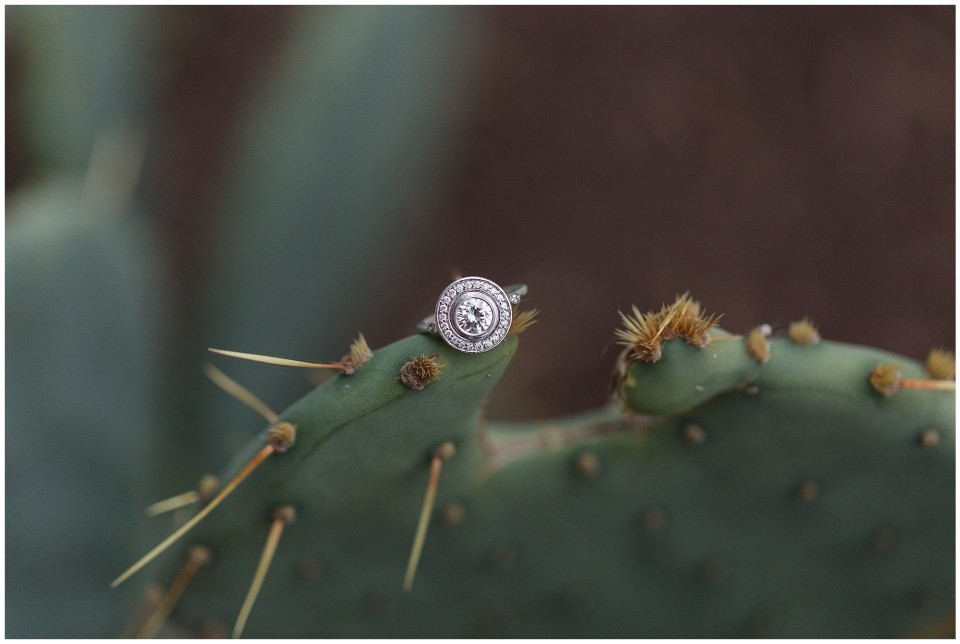 engagement ring on cactus