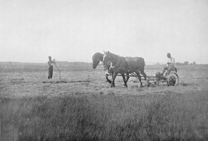 """""""In cutting the grass, which is done in August at periods of a low run of tides, mowing machines are used, except in the lower, softer places where the scythes are swung."""
