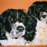 English Springer Spaniels - pet portrait - Kelly Goss