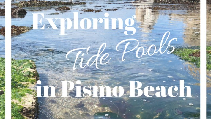 Best tide Pools in Pismo Beach. Learn more at www.kellyluvs.com