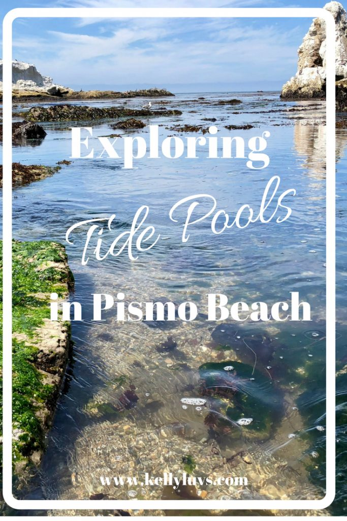 Have you ever exploring the amazing world of Tide pools? On a recent trip to California we discovered the best tide pools in Pismo Beach.  Read more at www.kellyluvs.com