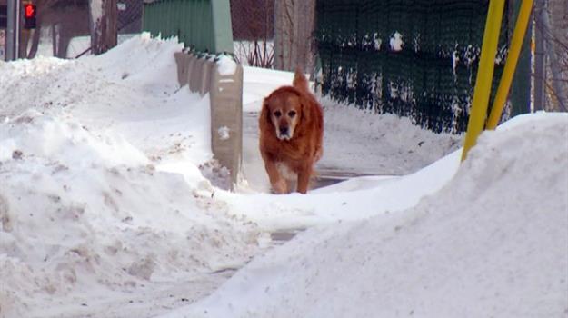 cold-pets_528882510621