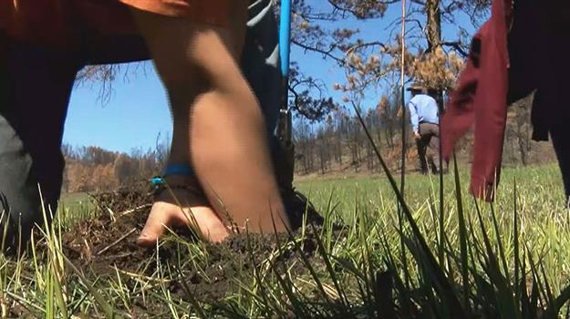 planting-trees_615541550621