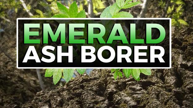 emerald-ash-borer-banner_446361550621