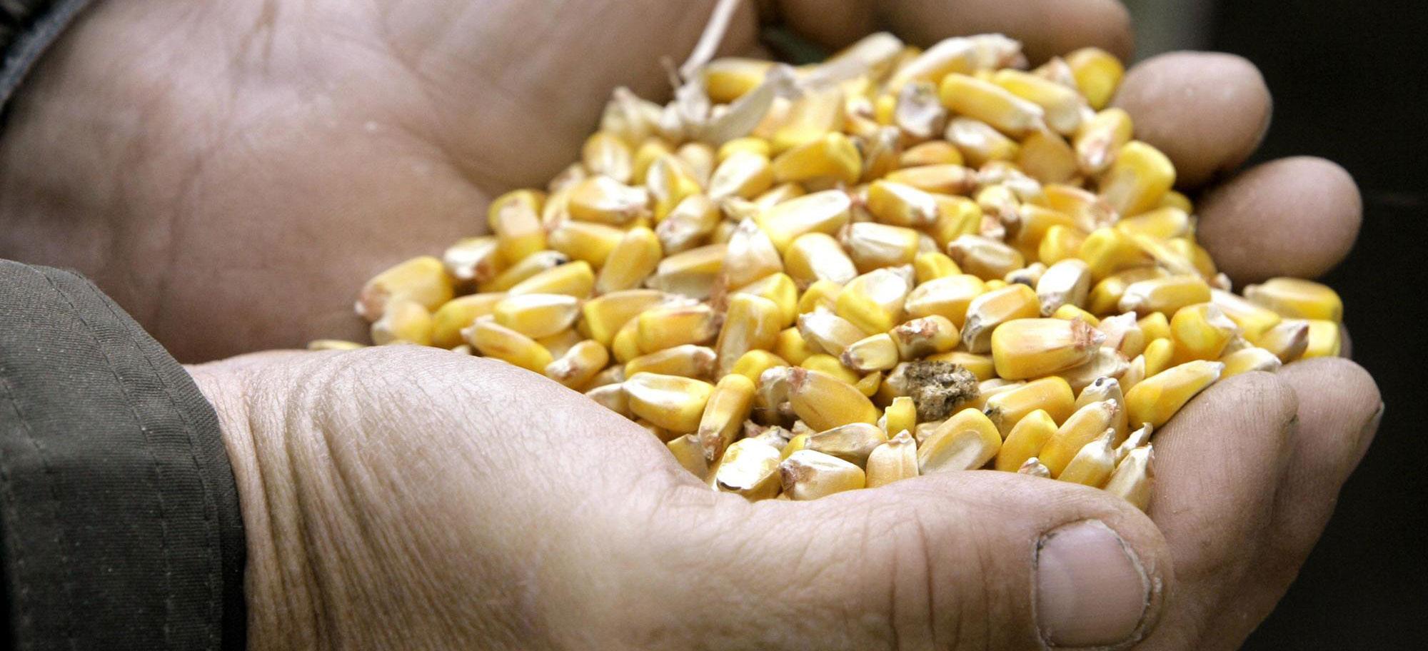 corn-grain-elevator-farming-farm-crops-markets_1757135