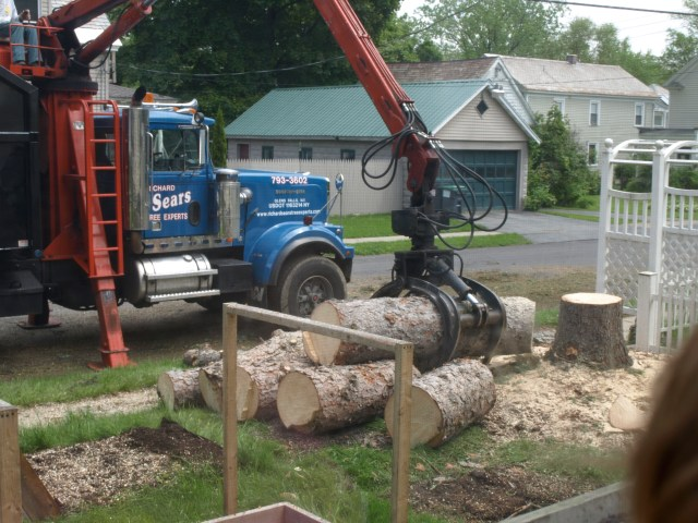 The Pine Tree Pieces during removal