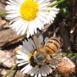 National Honey Bee Day Oregon Honey Festival