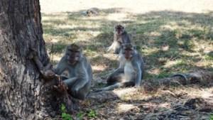 Fauna Taman Nasional Baluran