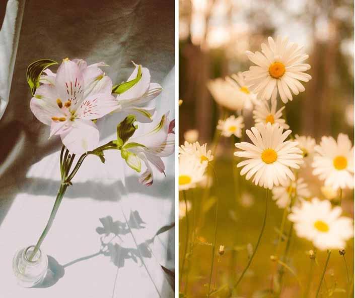 fiori san Valentino gigli e margherite