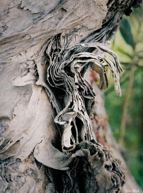 Curled Tree Bark