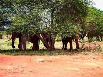 kenia-afrika-reise-bilder-093