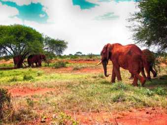 kenia-afrika-reise-bilder-094