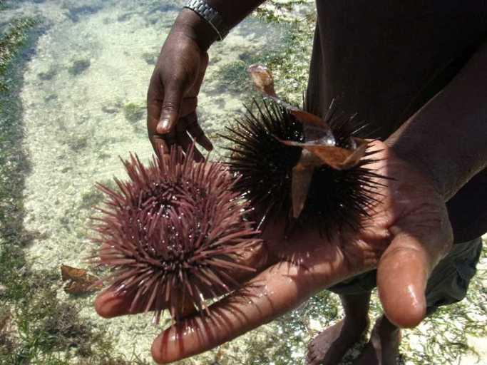 kenia-afrika-reise-bilder-1028