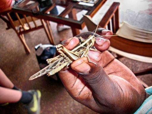 kenia-afrika-reise-bilder-121