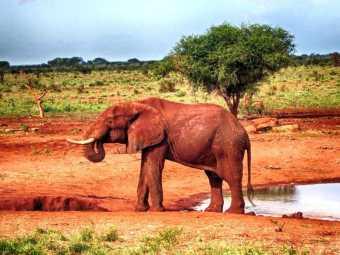 kenia-afrika-reise-bilder-131